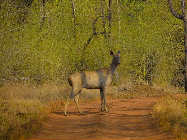 <strong>READ MORE ABOUT TADOBA NATIONAL PARK</strong>