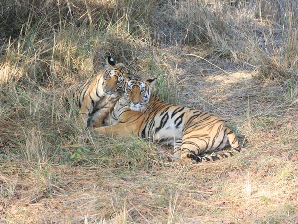 35. Bandhavgarh National Park