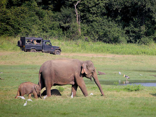 Why You Should Visit Koundinya Wildlife Sanctuary
