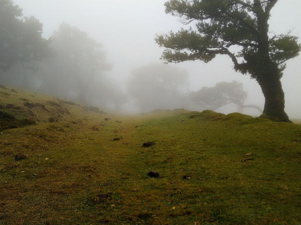 READ MORE ABOUT ARAKU VALLEY