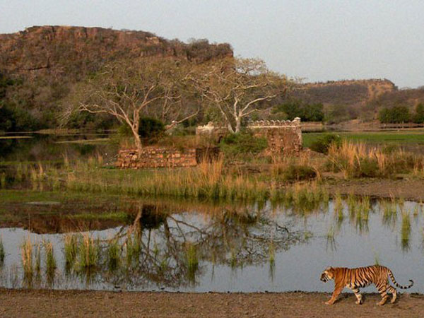 34. Ranthambore National Park