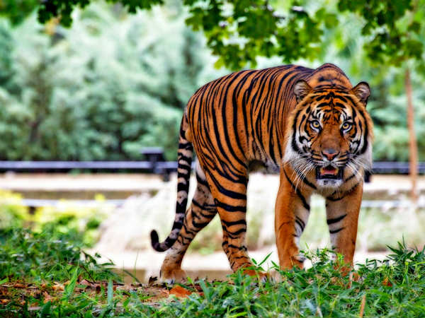 Wildlife Sanctuaries In Telangana