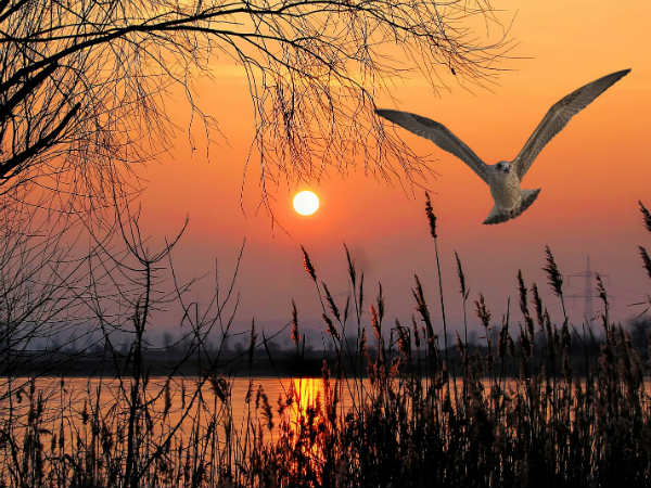 Kanwar Lake Bird Sanctuary Travel Guide, Attractions And How To Reach -  Nativeplanet