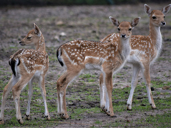 7) Sagareshwar Deer Park: