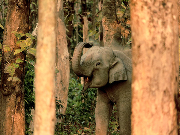 3) Chapramari Wildlife Sanctuary