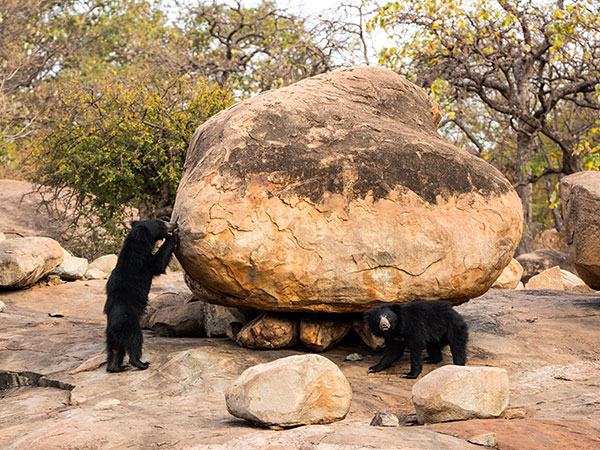 10) Jessore Sloth Bear Sanctuary, Banaskantha district