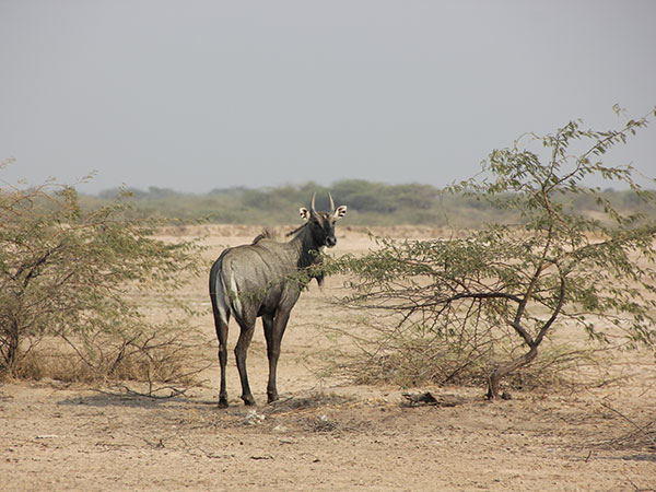 7) Kutch Desert Wildlife Sanctuary, Great Rann of Kutch