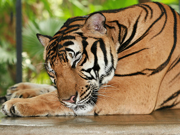 2. Namdapha National Park And Tiger Reserve