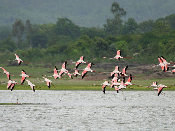 3) Pocharam Wildlife Sanctuary