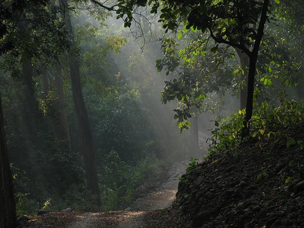1. Jim Corbett National Park