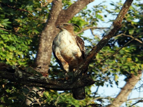 Keoladeo National Park, Bharatpur, Rajasthan