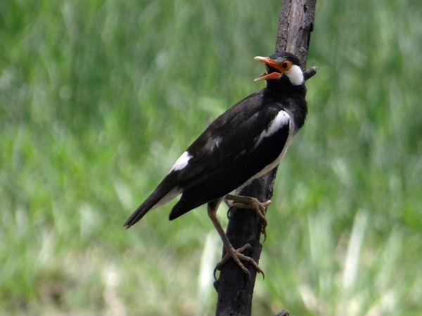 Pench National Park, Madhya Pradesh
