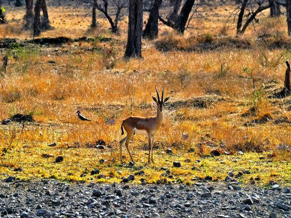 Ranthambore National Park, Sawai Madhopur, Rajasthan