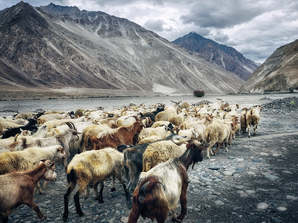 6. Ladakh is less crowded during winter