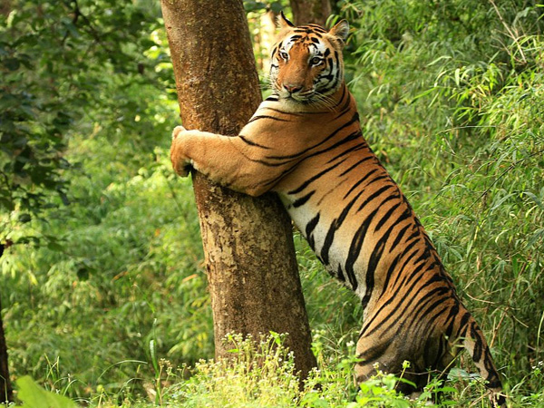 1. A safari ride at Kanha National Park