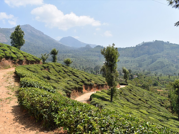 4. Hosts Umpteen Number Of Spice, Tea And Coffee Plantations