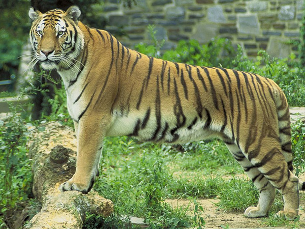 4. Pench