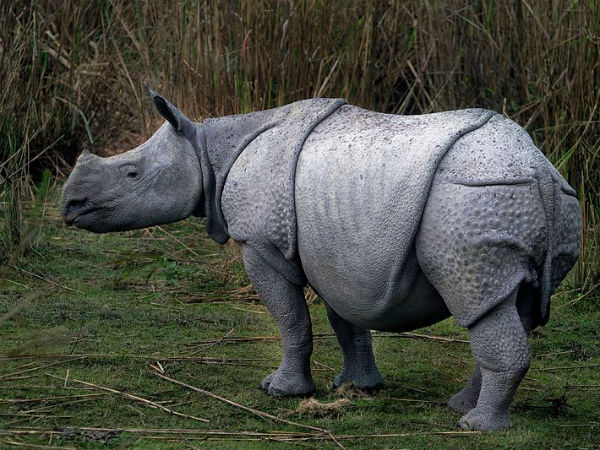 9. Kaziranga National Park, Assam