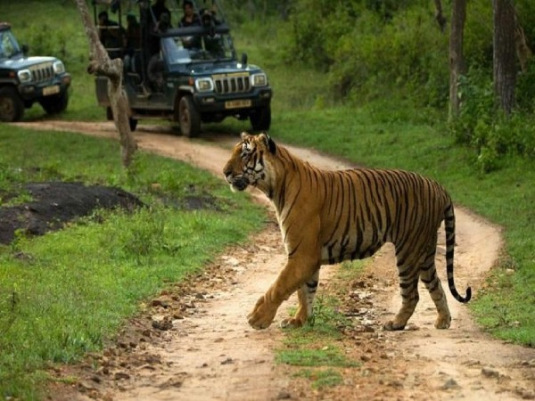 3.Bandipur National Park