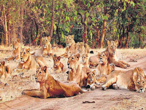 1. Gir National Park, Gujarat