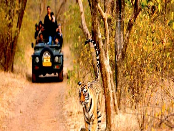 3. Ranthambore National Park