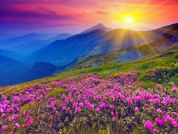 10. Valley Of Flowers