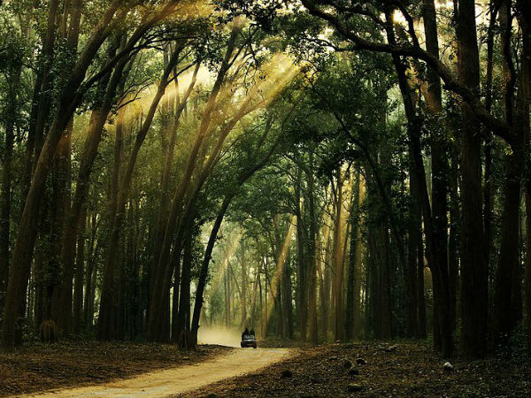 8. Jim Corbett National Park