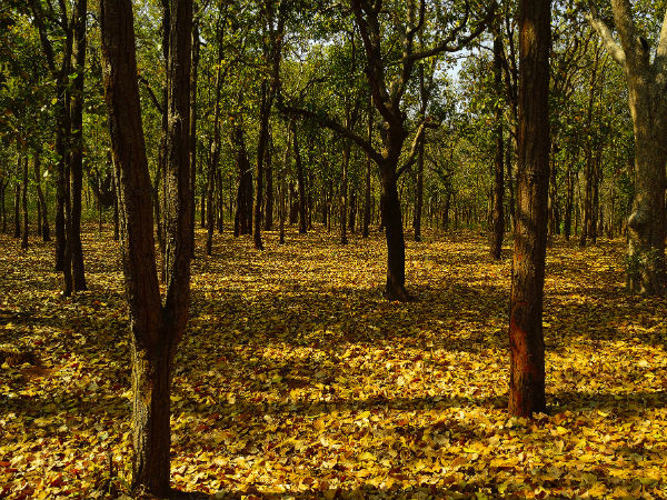9. Joypur forest