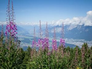 Head To Himachal Pradesh For The Colourful Phulaich Fair This September