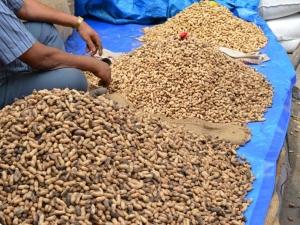 Head To Basavangudi This Weekend For Bengaluru's Groundnut Fair: Kadalekai Parishe