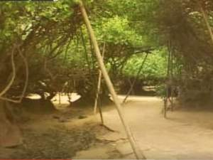 The Mysterious Nidhivan In Vrindavan
