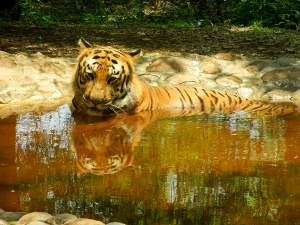 Day Trip To Bannerghatta National Park