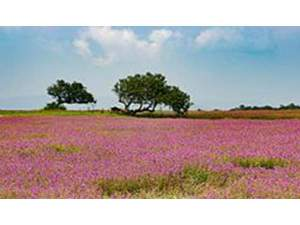 Kaas - Valley Of Flowers In Maharashtra