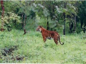 Bangalore To Bhadra Wildlife Sanctuary