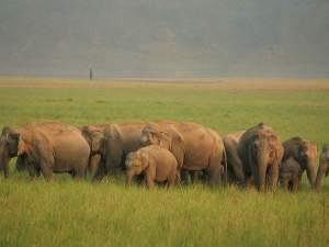 Into The Wild At Rajaji National Park
