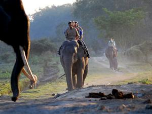 Venture Through Wildlife In Assam