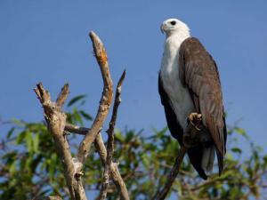Explore The Wildlife Of Odisha Part