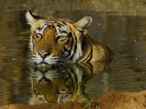Exploring The Sundarbans 000607 Pg