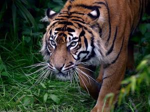 Andaman Nicobar Tourism National Parks 001436 Pg