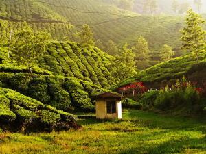 India Tea Plantation Destinations