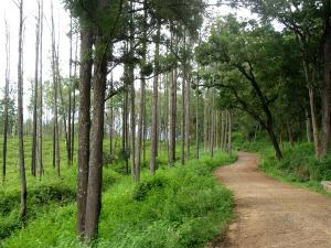Top Road Trips From Bangalore