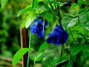 Take Tour Around The Serene Chikamagalur This Monsoon