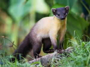 Exotic Animals Found In The Indian Himalayas