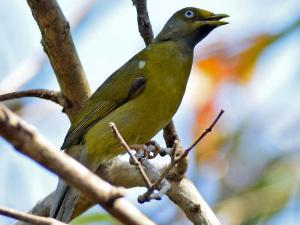 Gudavi Bird Sanctuary In Soraba