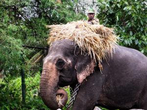 Sakrebailu Elephant Camp In Shimoga