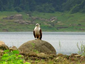A Trek Through The Chimmini Wildlife Sanctuary