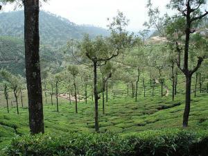 A Drive From Bengaluru To Valparai