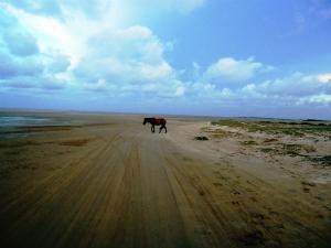 Must Visit Destinations Of Tamil Nadu