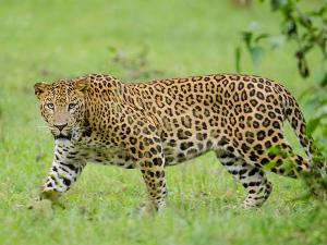 City To Safari Visit The Wildlife Of Nagarhole National Park