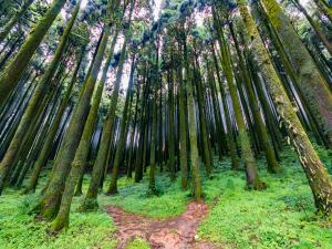 The Hidden Getaway Of Mungpoo From Darjeeling